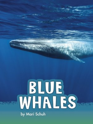 cover image of Blue Whales