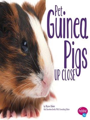 cover image of Pet Guinea Pigs Up Close