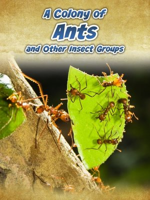 cover image of A Colony of Ants