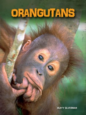 cover image of Orangutans