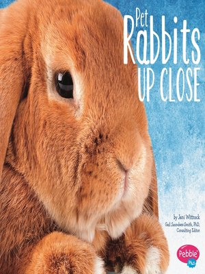 cover image of Pet Rabbits Up Close
