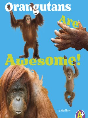 cover image of Orangutans are Awesome!
