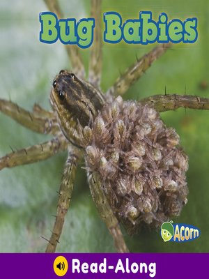 cover image of Bug Babies
