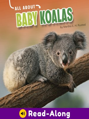 cover image of All About Baby Koalas
