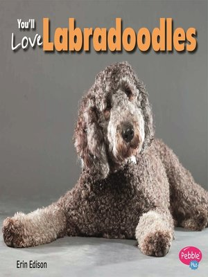 cover image of You'll Love Labradoodles
