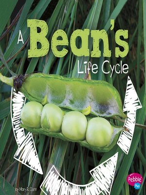 cover image of A Bean's Life Cycle