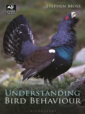 cover image of Understanding Bird Behaviour