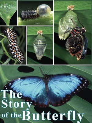 cover image of The Story of the Butterfly