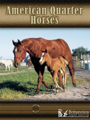 cover image of American Quarter Horses
