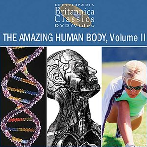 cover image of The Amazing Human Body, Volume 2: Part 3 of 5