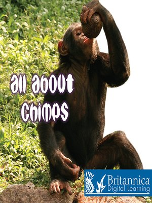 cover image of All about Chimps