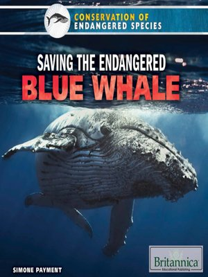cover image of Saving the Endangered Blue Whale
