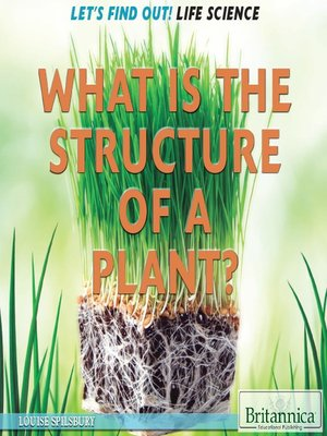 cover image of What Is the Structure of a Plant?