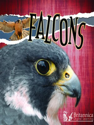 cover image of Falcons
