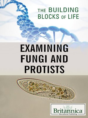 cover image of Examining Fungi and Protists