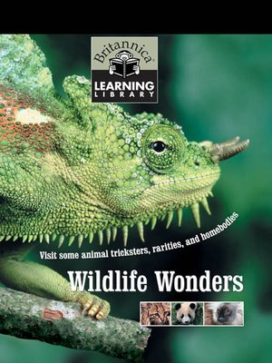 cover image of Wildlife Wonders