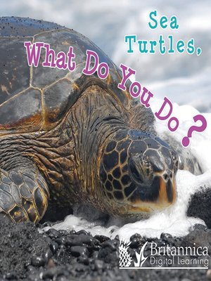 cover image of Sea Turtles, What Do You Do?