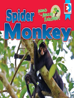 cover image of Animals of the Amazon Rainforest: Spider Monkey
