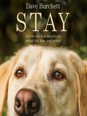 cover image of Stay