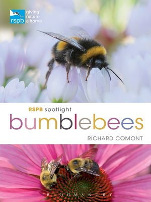 cover image of RSPB Spotlight Bumblebees