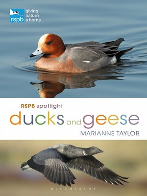 cover image of RSPB Spotlight Ducks and Geese
