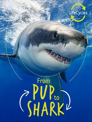 cover image of Lifecycles--Pup to Shark