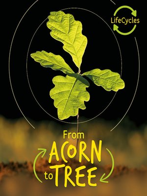 cover image of Lifecycles--Acorn to Tree