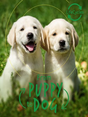 cover image of Lifecycles--Pup to Dog