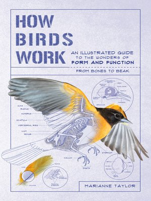 cover image of How Birds Work