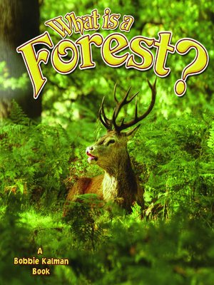 cover image of What is a Forest?