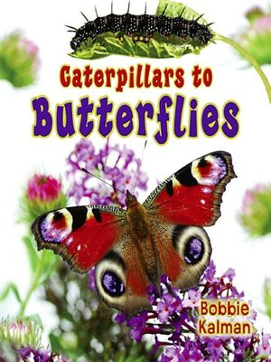 cover image of Caterpillars to Butterflies