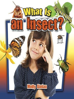cover image of What is an insect?