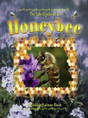 cover image of The Life Cycle of a Honeybee