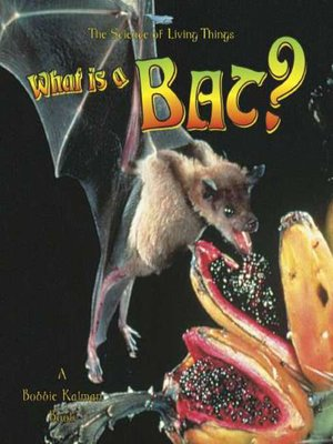 cover image of What is a Bat?