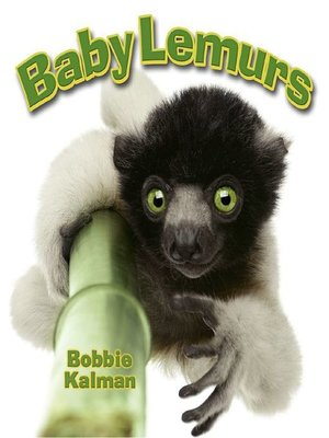 cover image of Baby Lemurs
