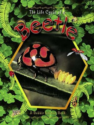 cover image of The Life Cycle of a Beetle