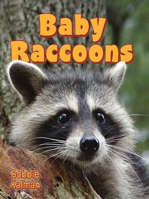cover image of Baby Raccoons
