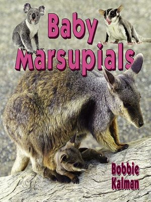 cover image of Baby Marsupials
