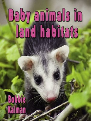 cover image of Baby Animals in land habitats