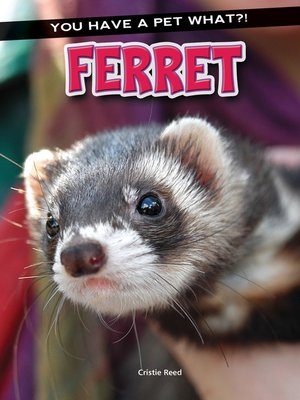 cover image of Ferret