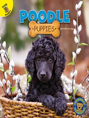 cover image of Poodle Puppies