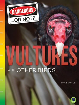cover image of Vultures and Other Birds