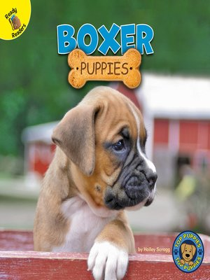cover image of Boxer Puppies