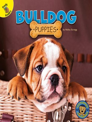 cover image of Bulldog Puppies