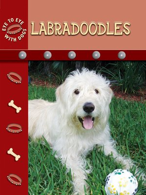cover image of Labradoodles