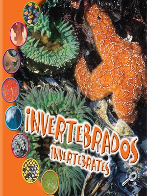 cover image of Invertebrados (Invertebrates)