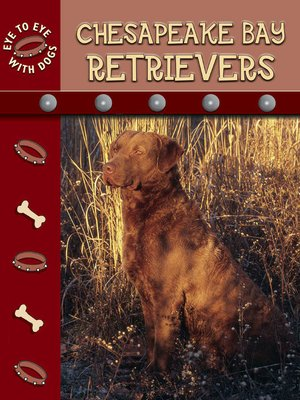 cover image of Chesapeake Retrievers