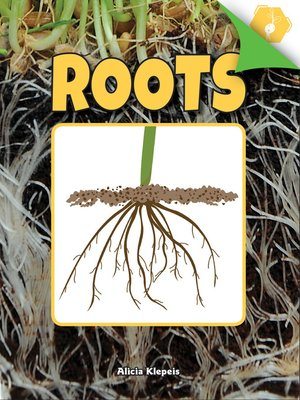 cover image of Roots
