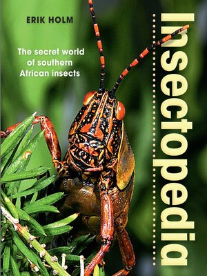 cover image of Insectopedia – the secret world of southern African insects