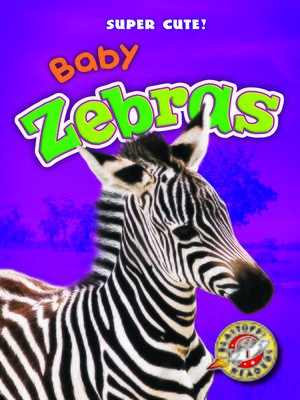 cover image of Baby Zebras